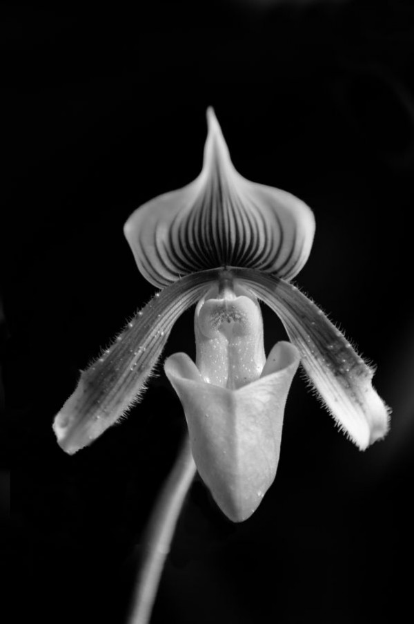 """""""Orchidée"""" - de Bruno Fosse - PC Dassault Argenteuil"""