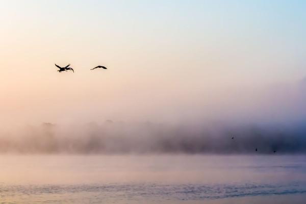 """""""Au lac de Der dans la brume"""" - de Denise Titeux - Rueil-Images"""