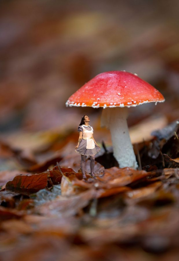 Alice et le champignon de Bernadette Bonneau-Lagache